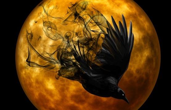 raven-988221_640.jpg