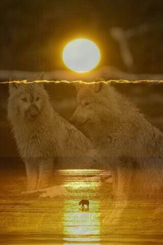 4f9833fbc085517a6a2e635b89dbb955--wolf-spirit-spirit-animal.jpg